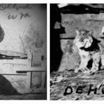 Wild Cat Bill, Dehue 1917